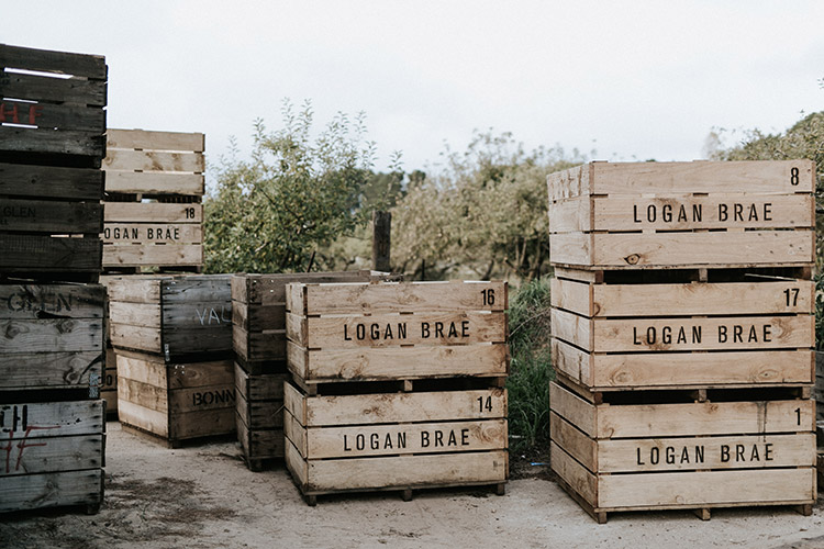 crates at wedding venue logan brae orchard the machinery shed in blackheath the blue mountains